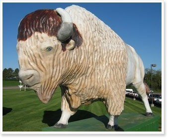 The White Buffalo In Madison Sd Prostrollo Automall