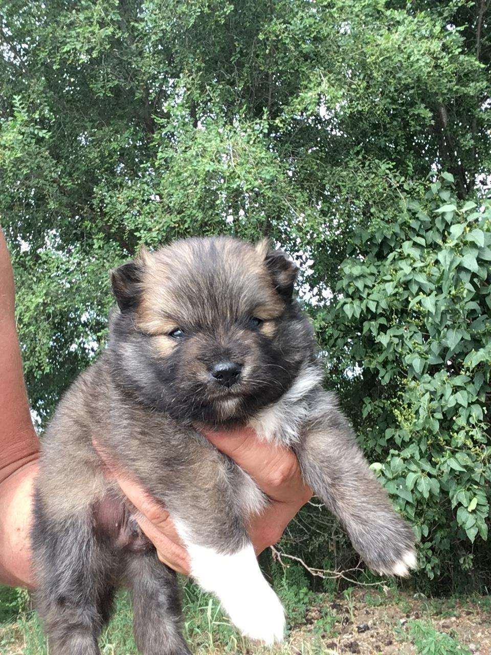 Hunting Dogs For Sale In Sioux Falls Sd